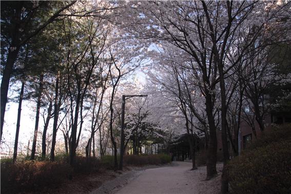 산책로 3.jpg