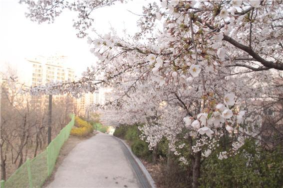 산책로 21.jpg