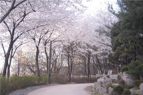 산책로 2.jpg